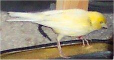 http://lyanes20.free.fr/site/fond3/oiseaux.inconu1.jpg