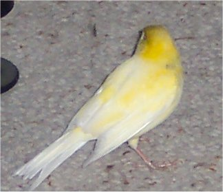 http://lyanes20.free.fr/site/fond3/oiseaux.inconu2.jpg